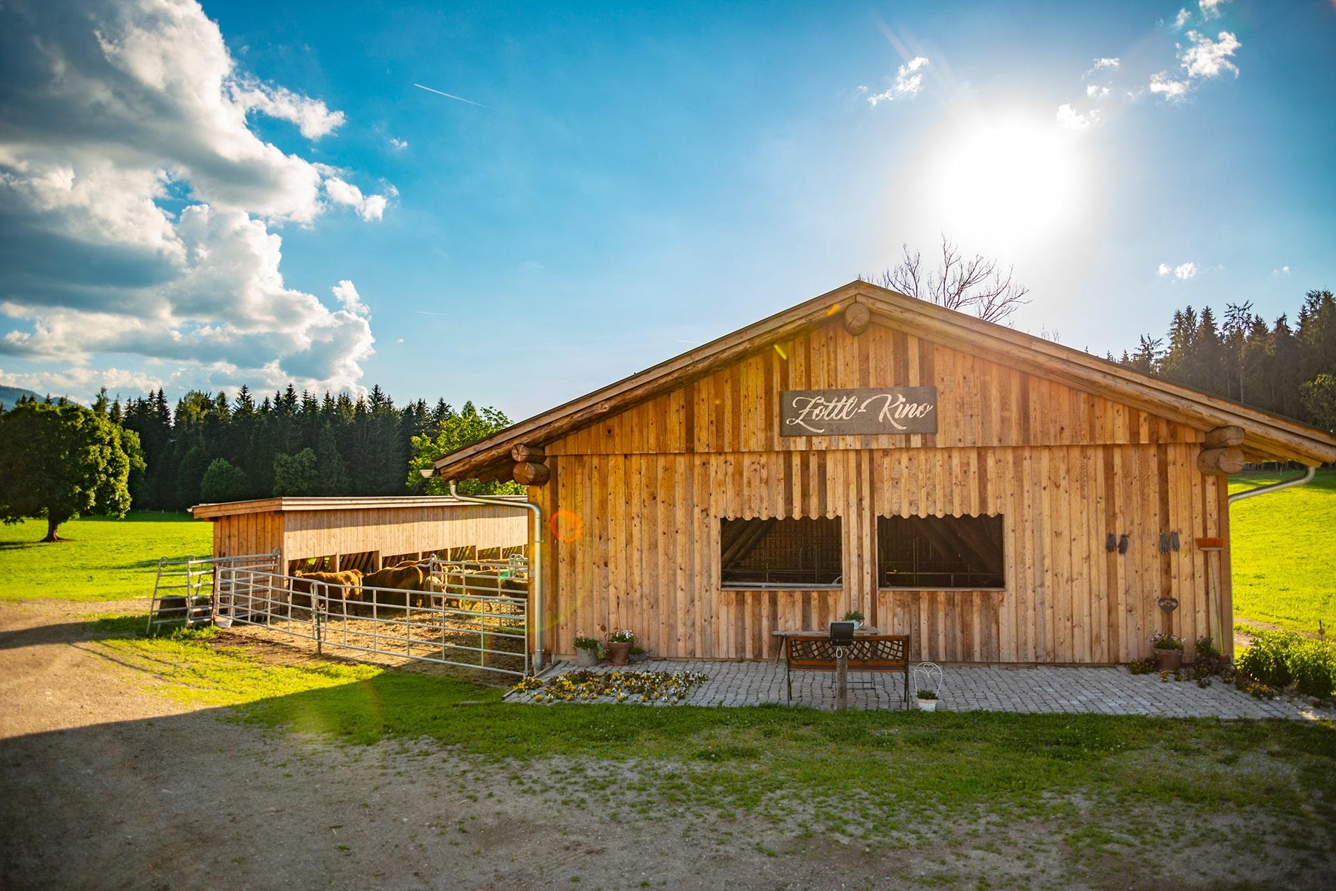 Hochlandrind Zucht - Ramsau am Dachstein