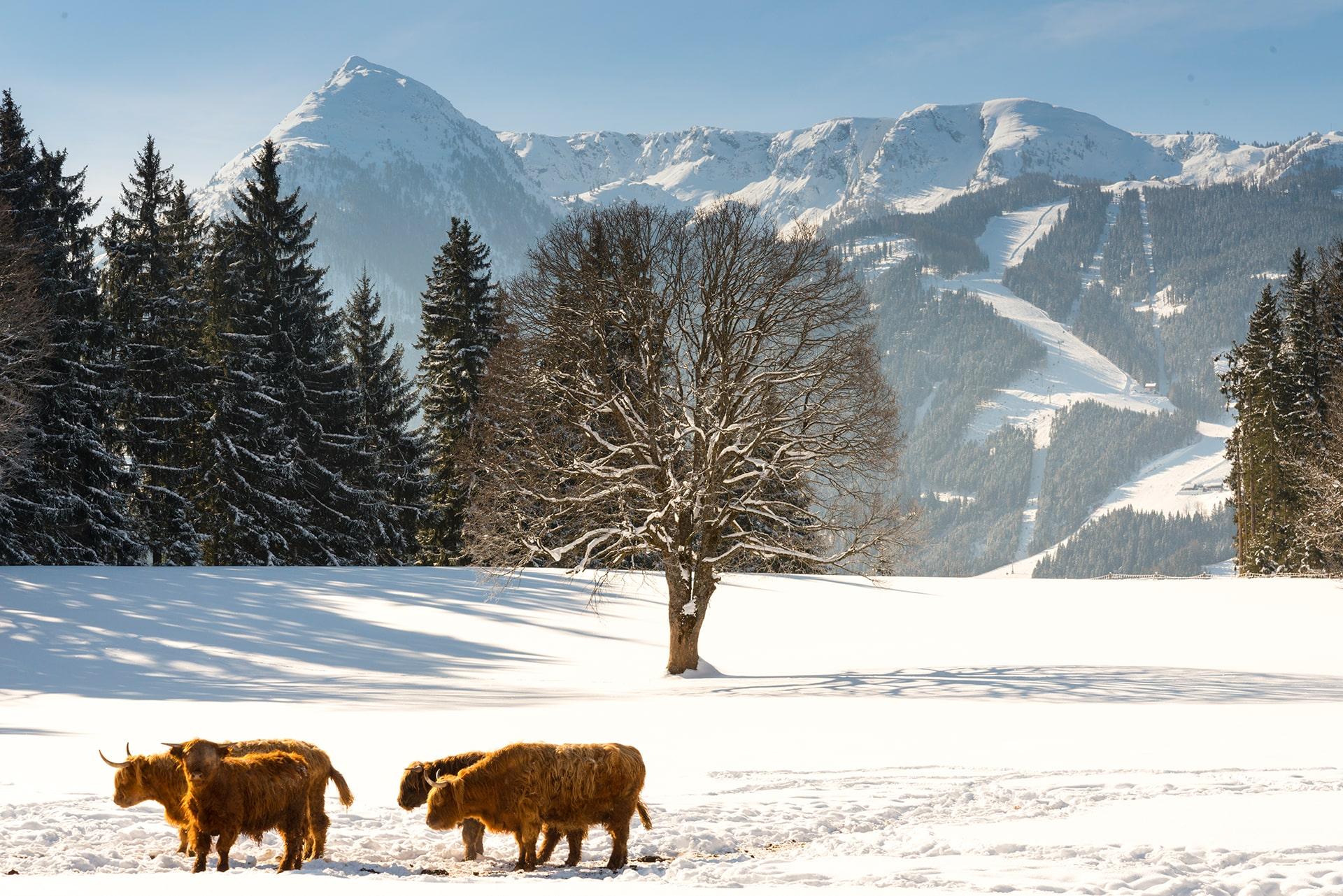 Winterurlaub in der Ramsau am Dachstein