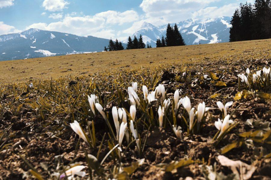 In jedem Frühling steckt der Zauber eines neuen Anfangs…